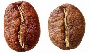grano-cafe-arabica-robusta-cafes-moreno